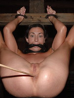 compilations BDSM sex